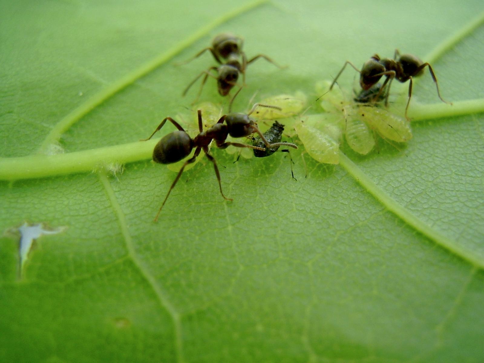 насекомые на здоровье