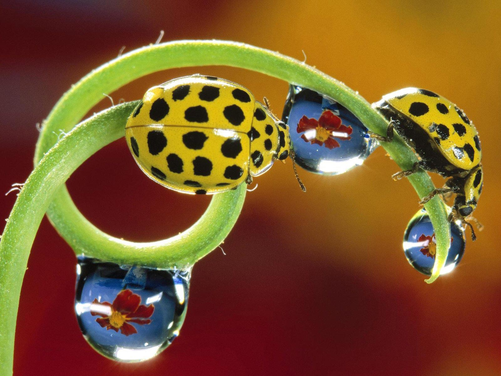 природа бабочка цветы животные насекомые роса загрузить