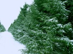 foret6