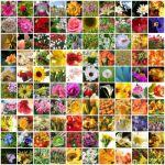 Flower Wallpapersb