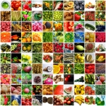 Fruit and Vegetable Wallpapers