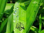 Ho Allah 2